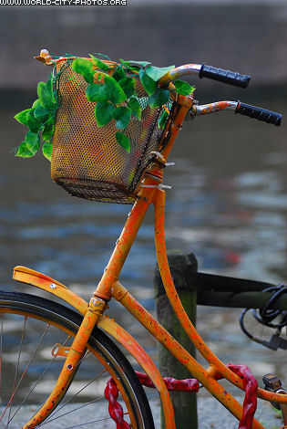Bike with flowers in Amsterdam