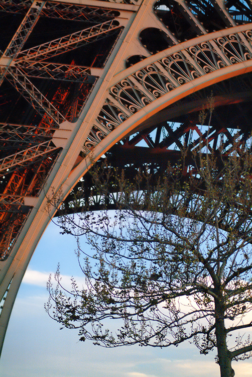 Eiffel Tower and tree